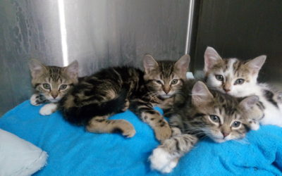 Petits chatons à adopter!